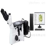 中、大型倒置金相显微镜FXD-30MW