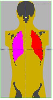 人体全身数字体模