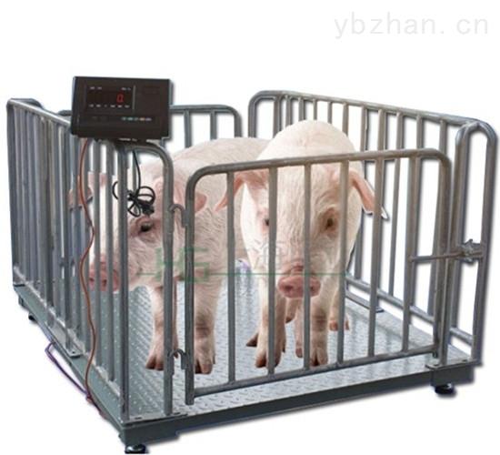 農戶專用固定式稱豬稱豬畜牧秤