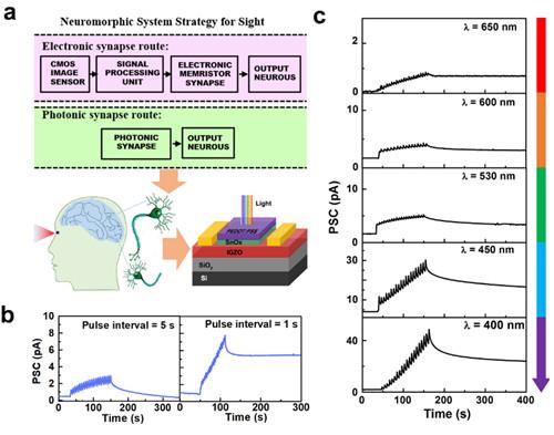 我國在新型光電/突觸薄膜晶體管研究方面取得進展
