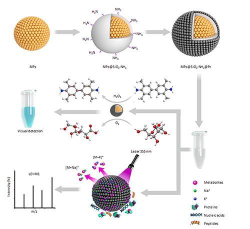 大連化物所多功能氧化硅鉑基納米反應器用于胰腺癌檢測