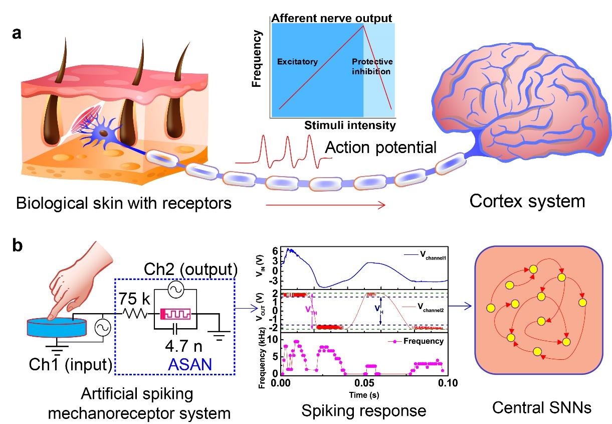 微電子所等在類腦感知計算領域獲進展